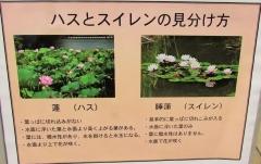 shouwa180520-202.jpg