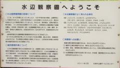 syakujii180414-201.jpg