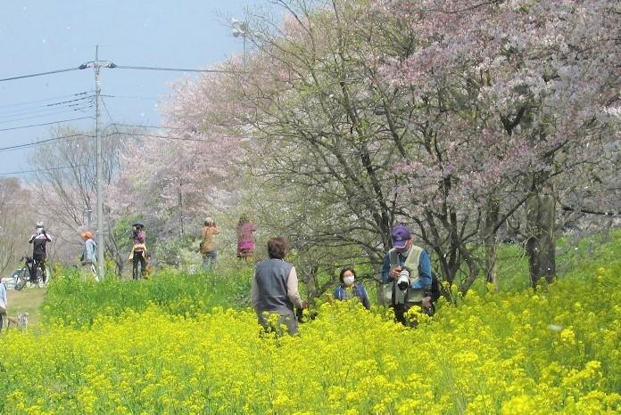 yoshimi-sakura180401-106.jpg