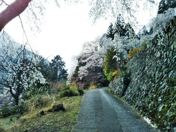 身延9 西谷という山里に迷い込んだら、本当に桜神界にタイムトリップしたみたい