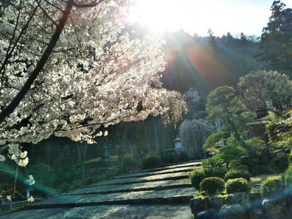 身延山11 オーブまでが桜型 日蓮廟