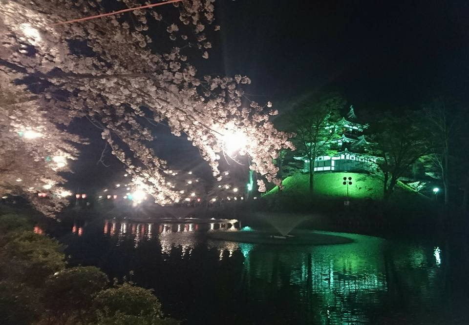 【高田の夜桜2018】-2