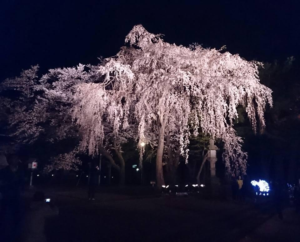 【高田の夜桜2018】-3