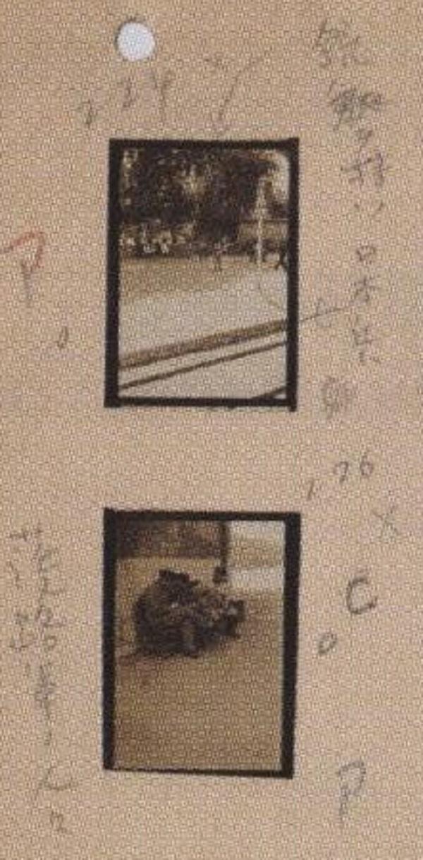 イメージ (972)