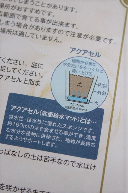 アクアセル 紫陽花 (4)