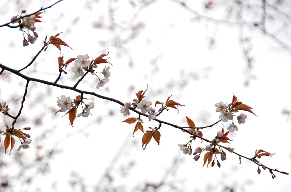 京都御苑06a