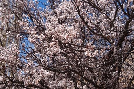 P4230619_R.jpg