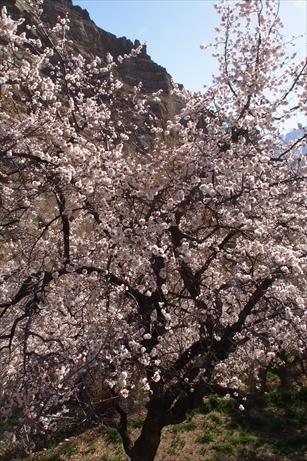 P4240816_R.jpg
