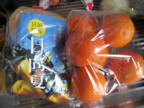 日向夏とブラッドオレンジ