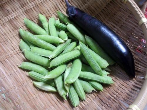 エンドウ豆